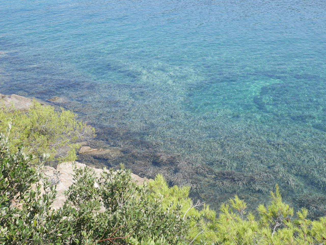 Herbiers de Posidonie - Port Cros