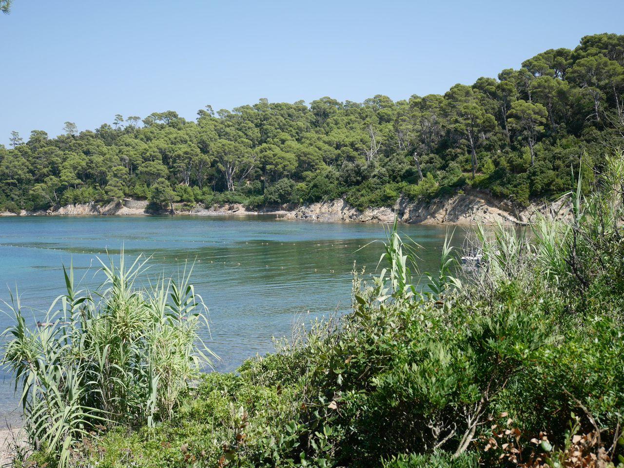 Côte de l'île de Port Cros