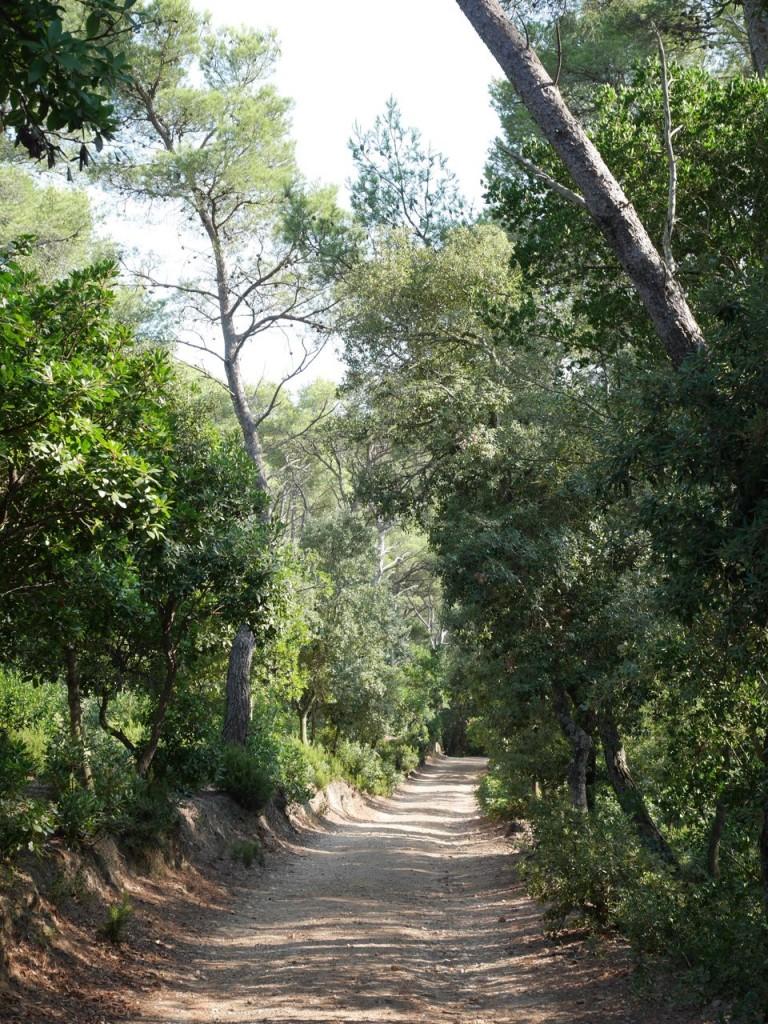Forêt de Port Cros