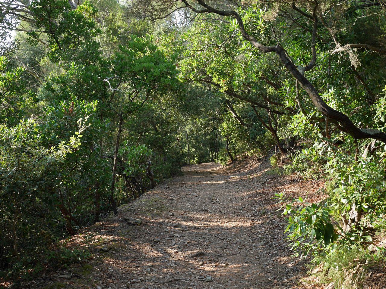 Forêt de l'île de Port Cros