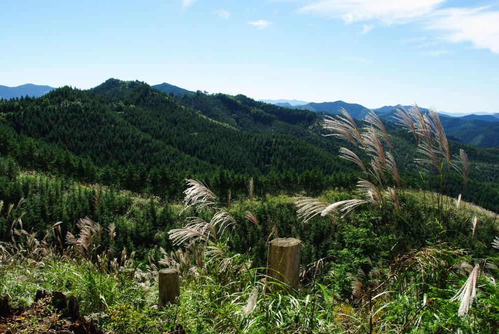 les montagnes autour de Koya San