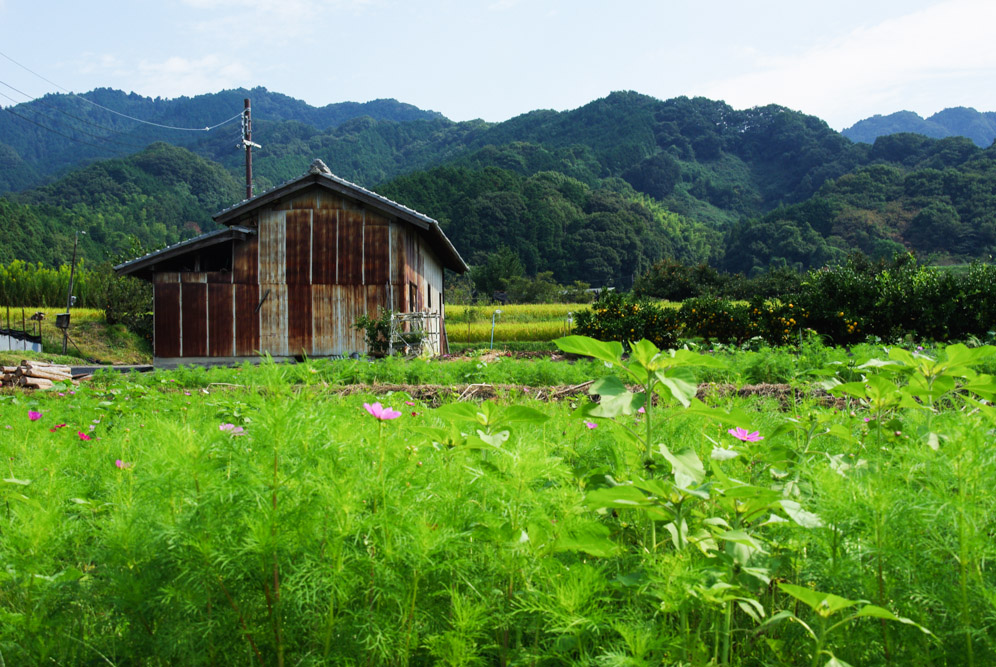 Rizières le long de la randonnée Yama-be-no-michi - Nara