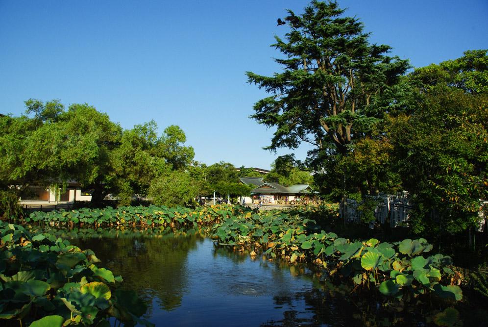 jardin du sanctuaire tsurogaoka Hachiman-gu - Kamakura