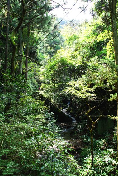 chemin de randonnée Takao-San