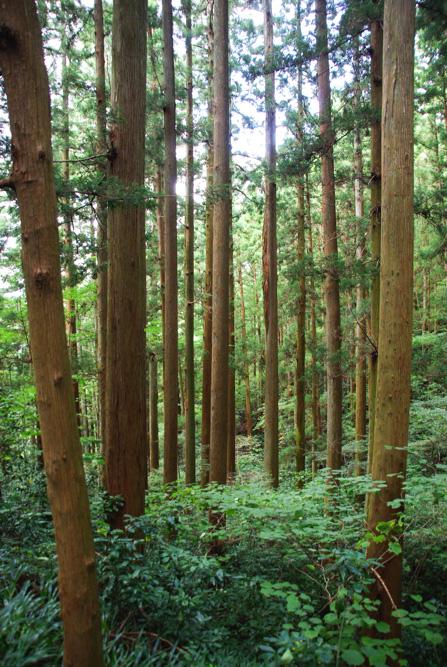 forêt Takao-San