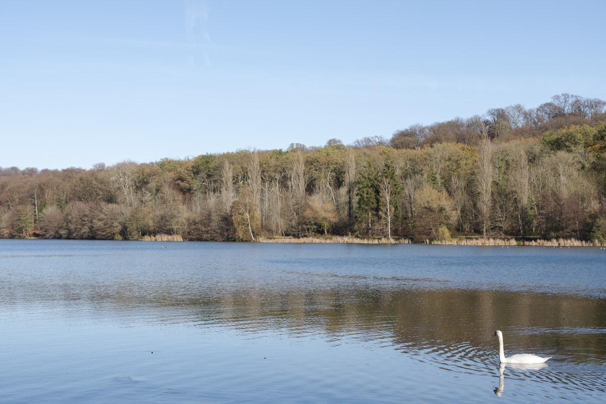 Etang Saint Pierre - forêt de Compiègne