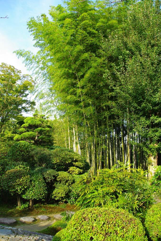 bambou - uraku-en - Inuayama