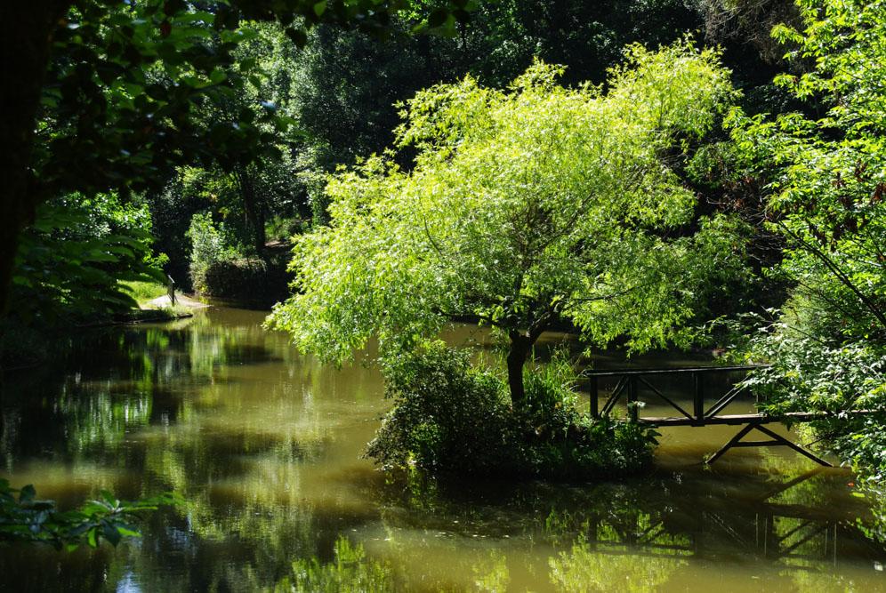 Bussaco : la forêt enchantée