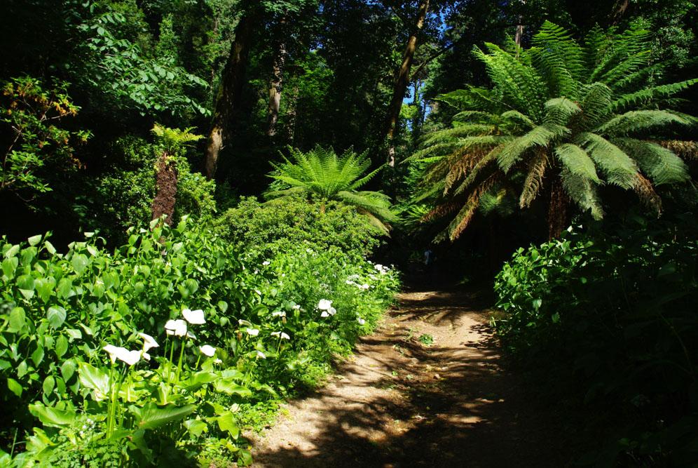 Allée des fougères - Forêt de Bussaco