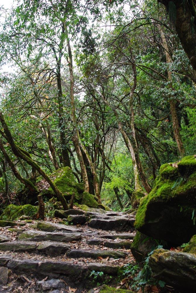 chemin dans la forêt sur le trek du sanctuaire des Annapurnas