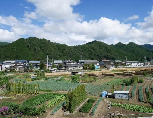 Exploitations agricoles autour d'Hida Furukawa