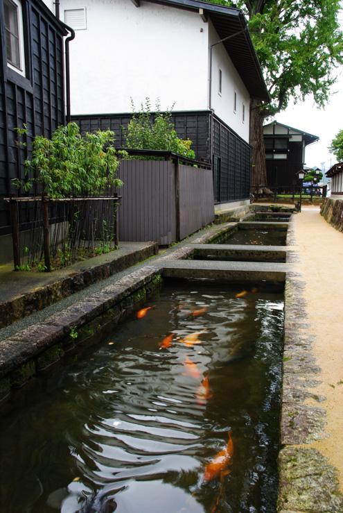 canal d'hida-furukawa avec ses carpes