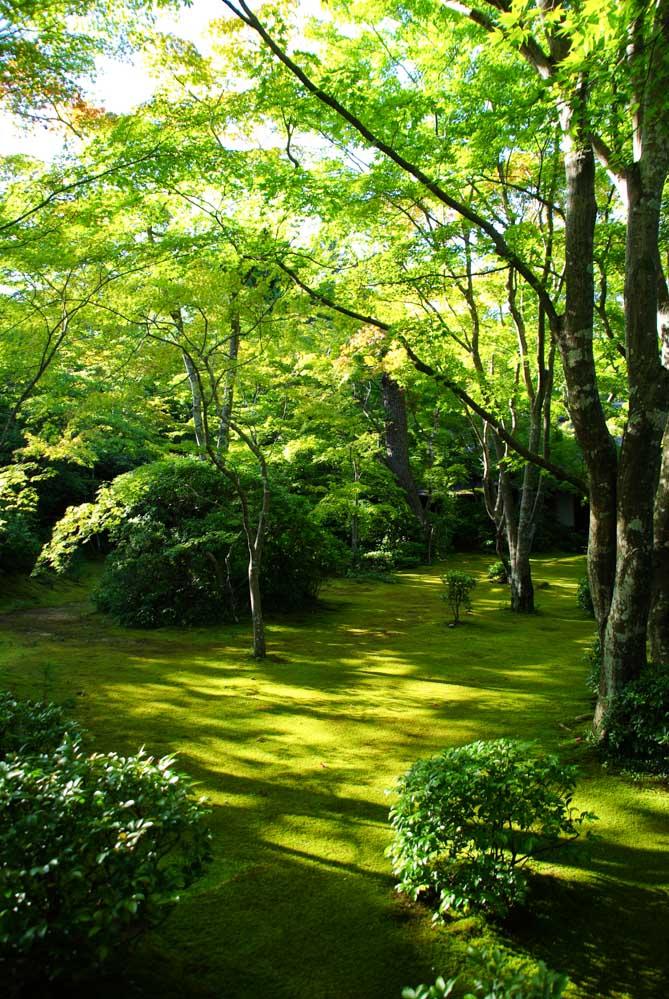 jardin de mousse - maison Okochi Sanso