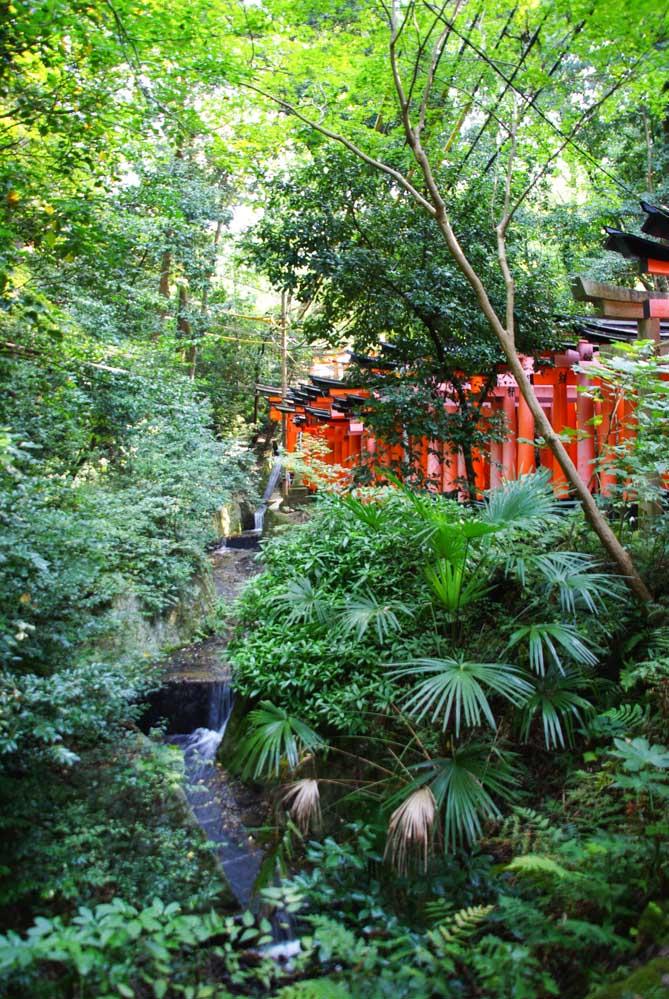 tori dans la foret - Fushimi Inari