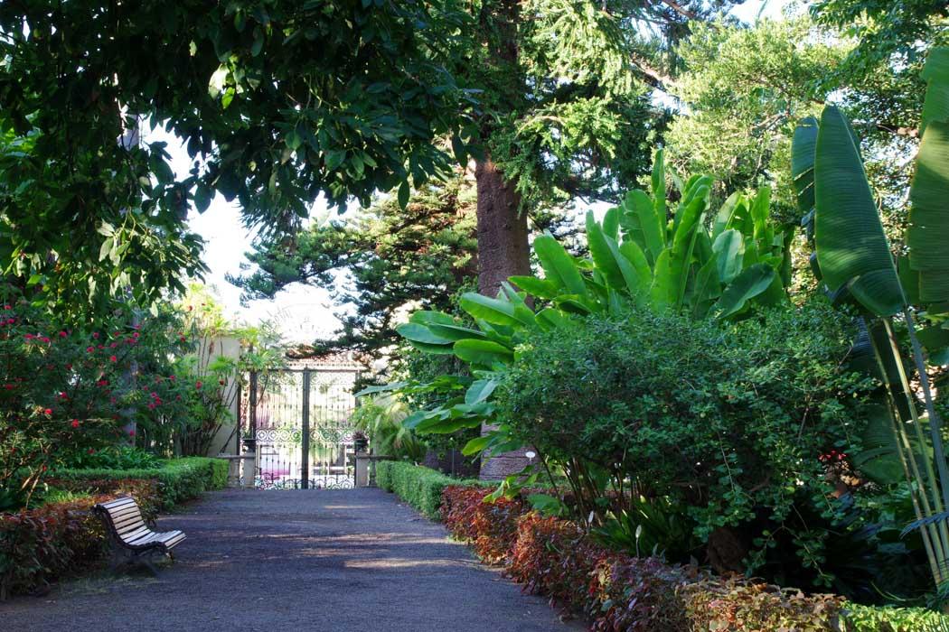 le jardin botanique de Puerto de la Cruz