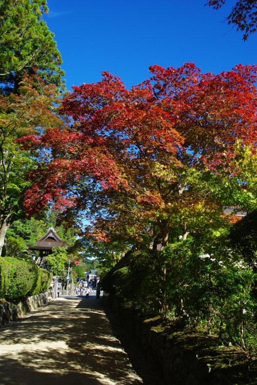 début de Momiji à Koya-San