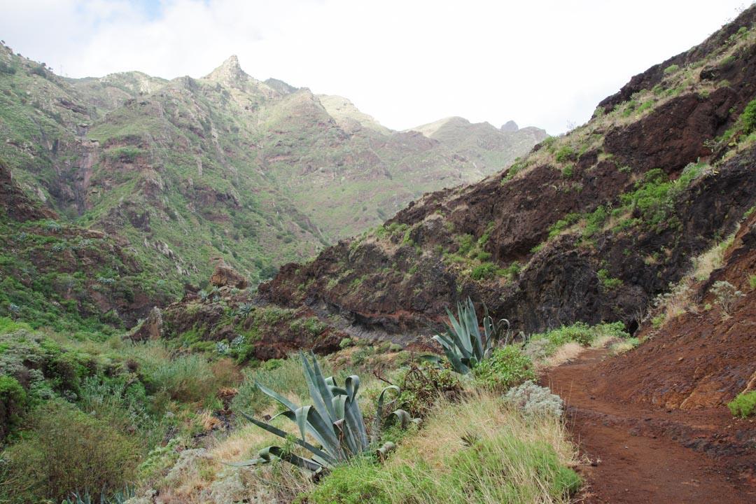 paysage de l'Anaga