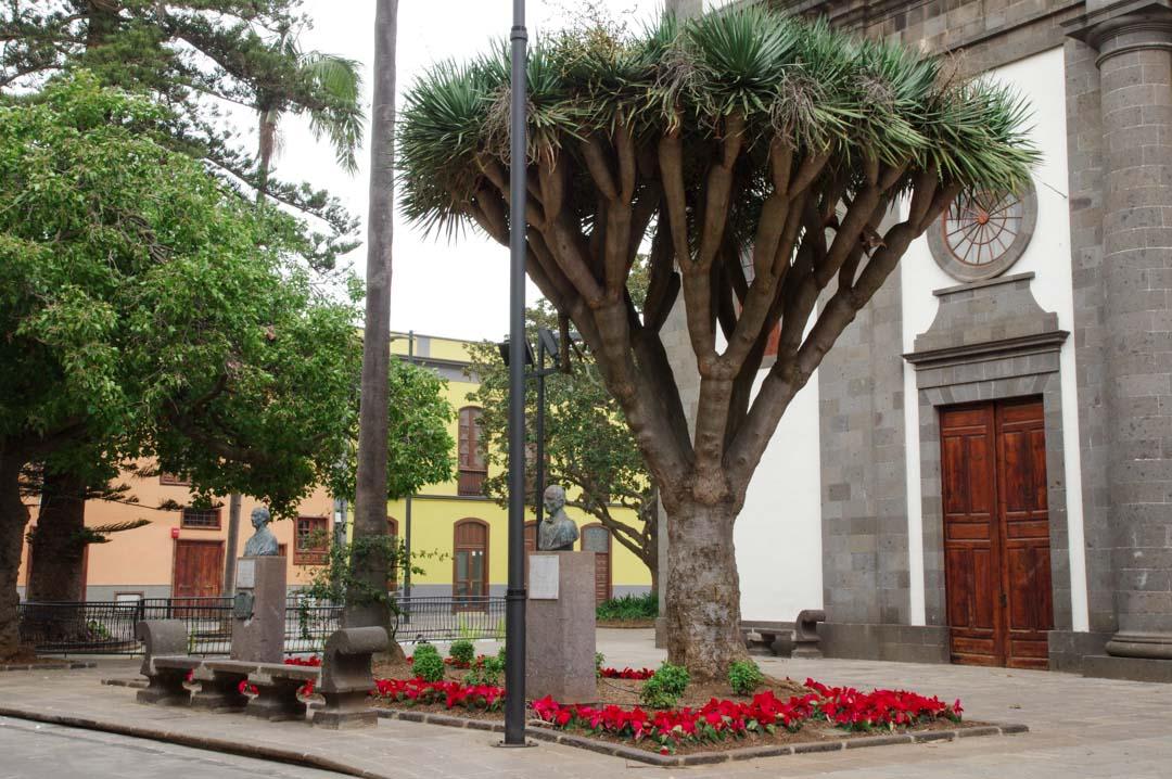 Cathédrale de la Laguna - Tenerife
