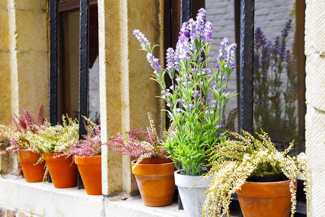 pot de fleurs dans le quartier Vlaeykensgang - Anvers