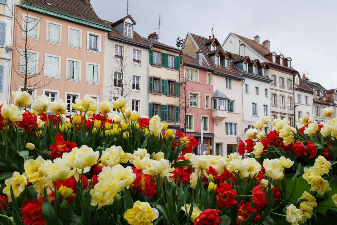 tulipes à montbéliard