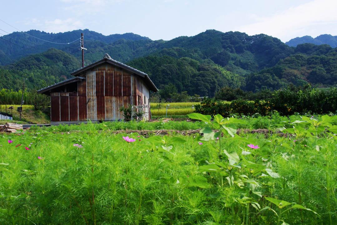 Campagne japonaise autour de Nara