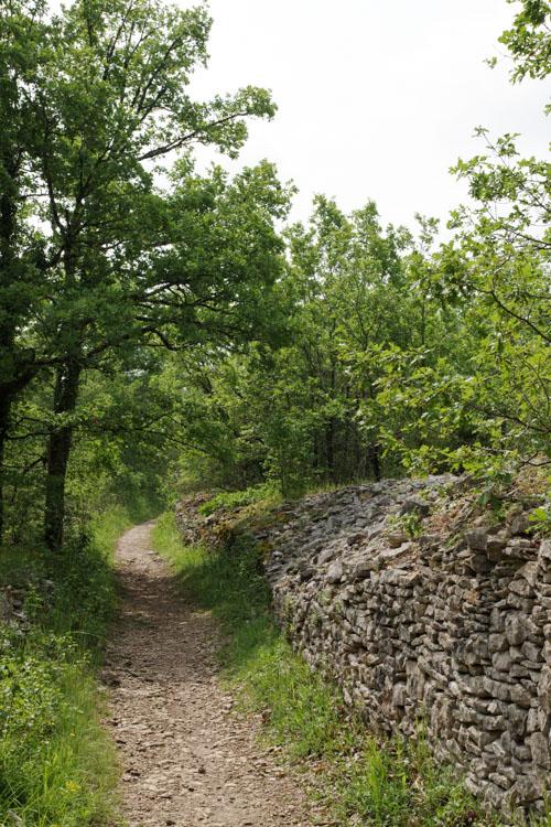 Sentier de randonnée - Montagne Pelée - Corrèze