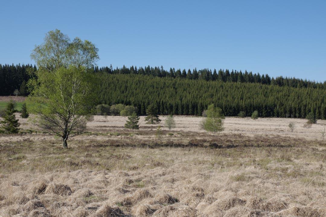 Tourbière du Longueyroux - Plateau des Millevaches