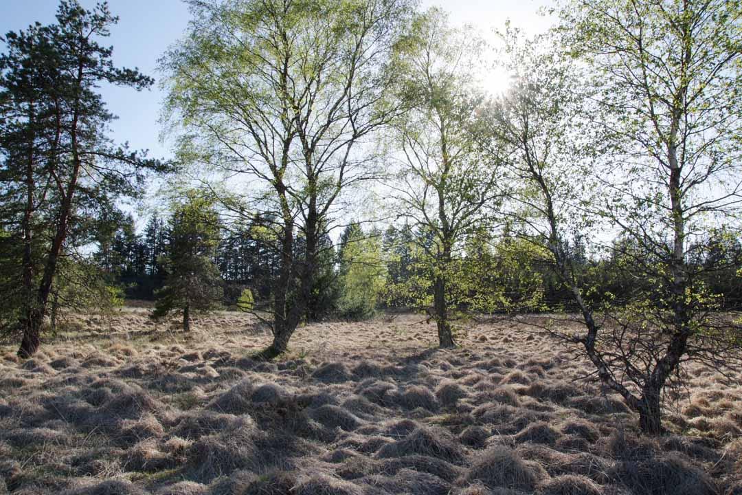 3 idées de randonnées dans le parc naturel de Millevaches en Limousin