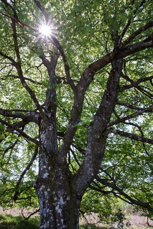 soleil filtrant à travers les arbres