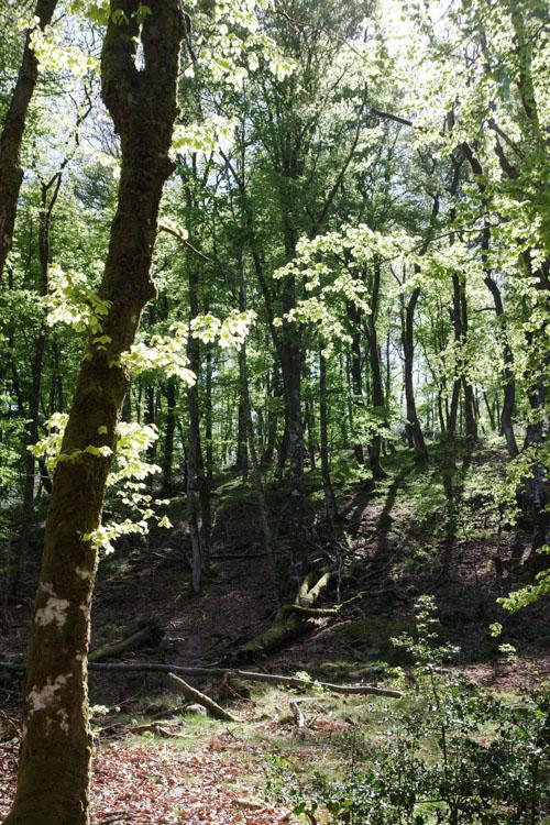 Forêt sur le plateau de Millevaches