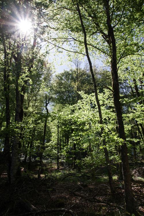 Le soleil perçe à travers la forêt - Plateau de Millevaches