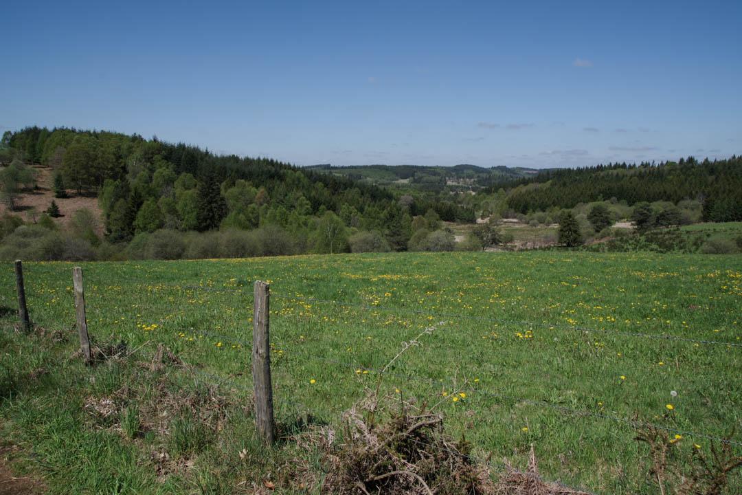 paturage - Plateau de Millevaches