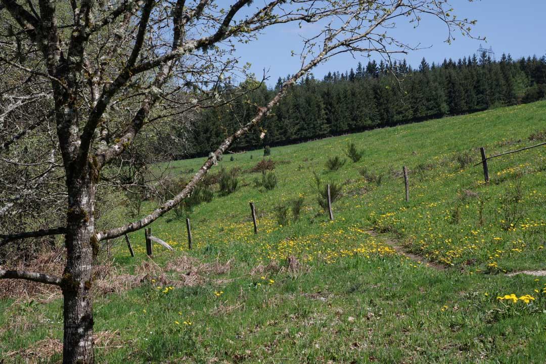 chemin de randonnée - Plateau de Millevaches