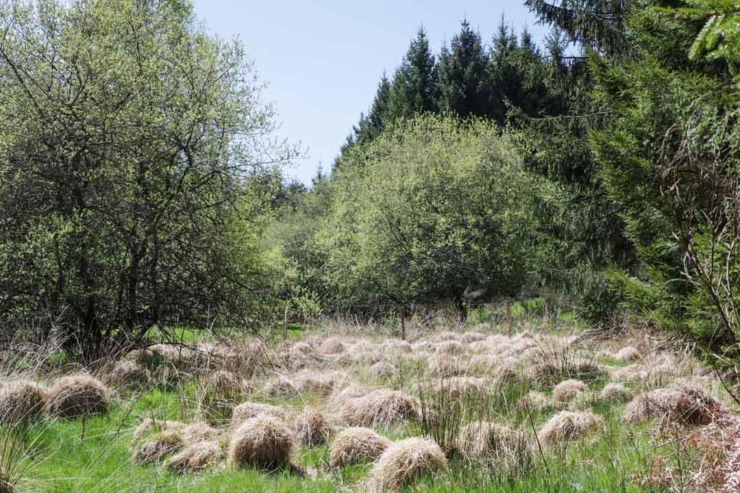 tourbière - Plateau de Millevaches