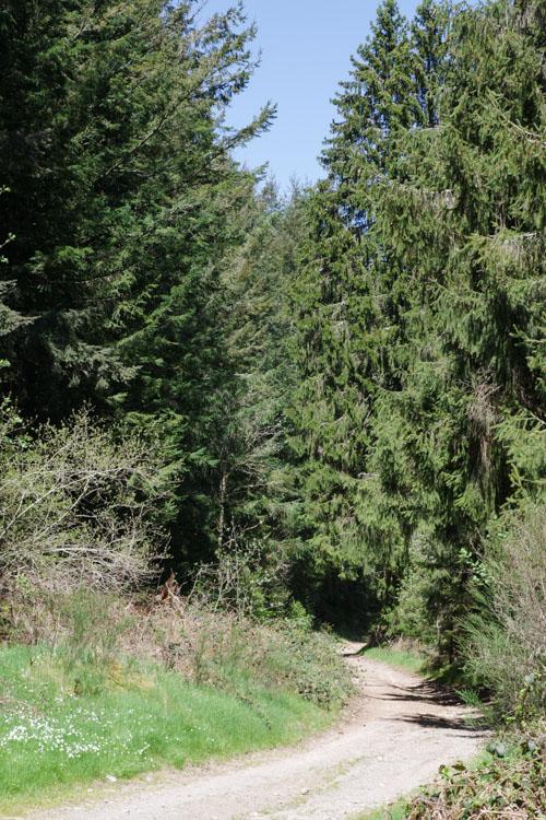 chemin de randonnée des sources de la Vienne - Plateau de Millevaches