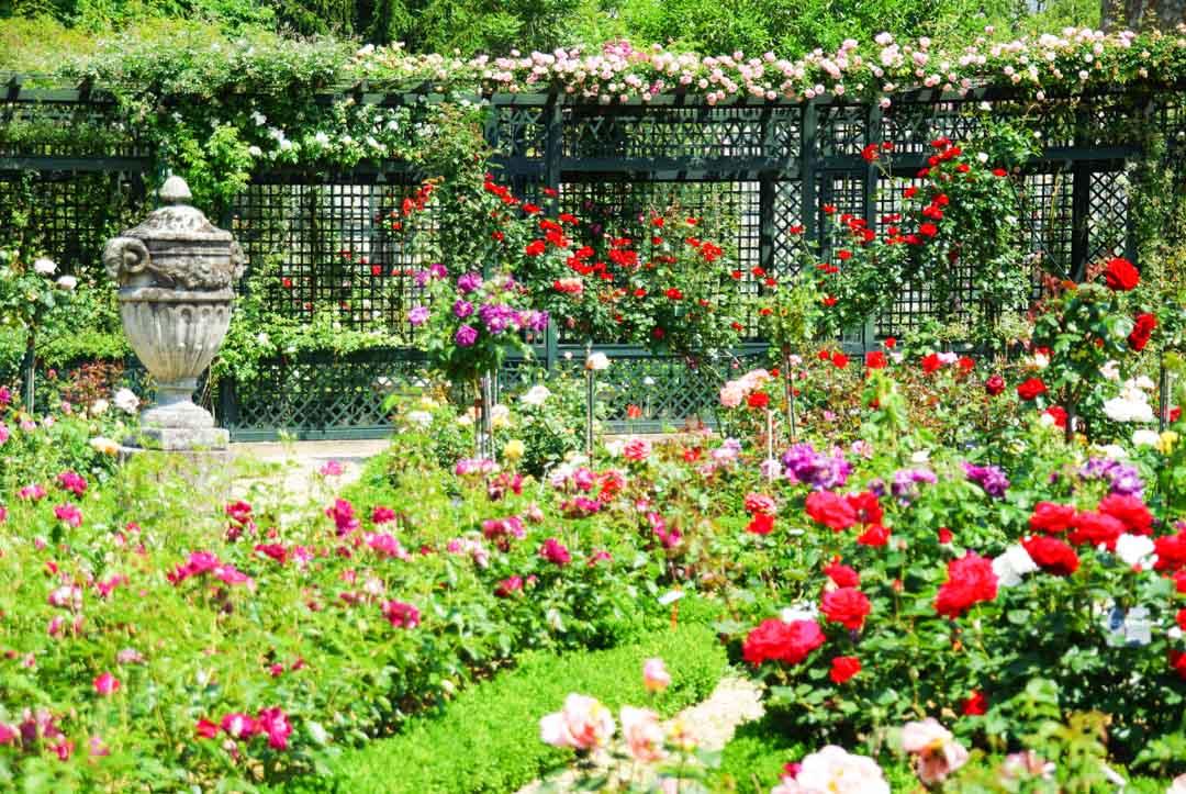 Rosiers multicolores - Roseraie de l'Hay les Roses