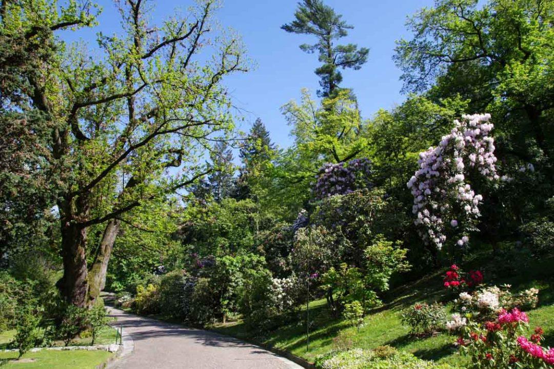 Les allées fleuries de Rhododendron dans le jardin botanique de la villa Taranto
