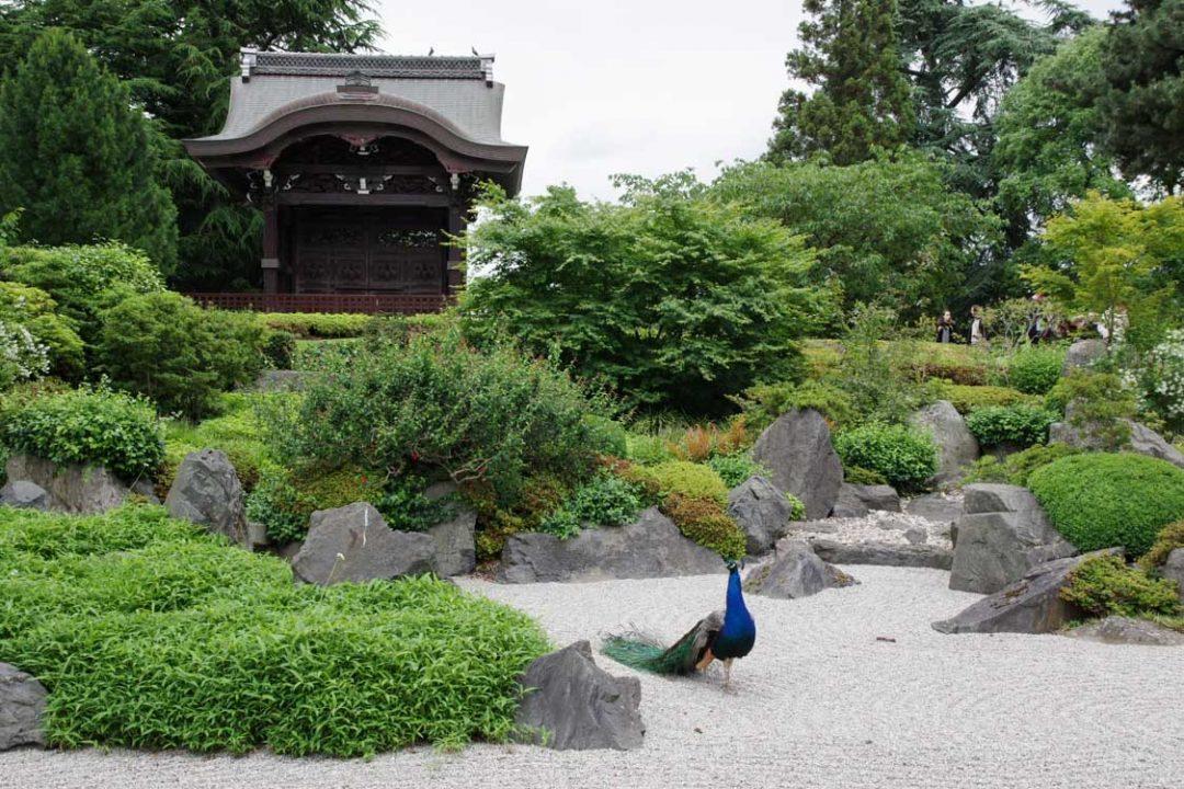 le jardin japonais de Kew Garden