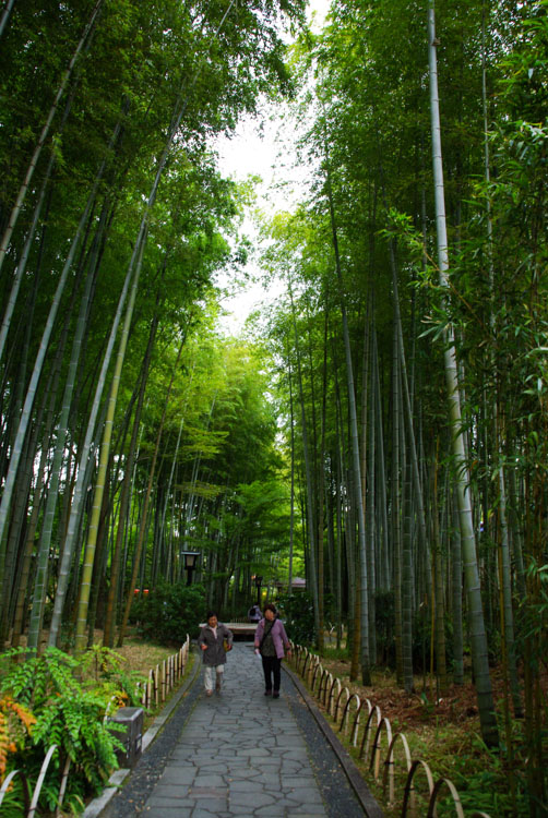 bambouseraie de shuzenji Onsen