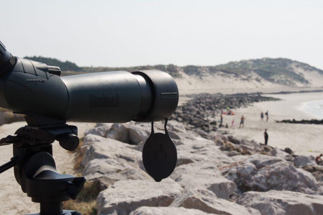 Observation des phoques à la longue vue