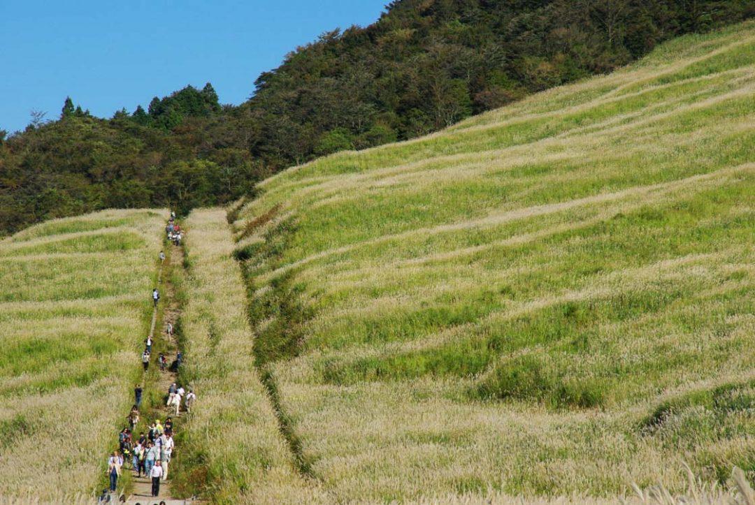 Balade dans les silvergrass à Hakone