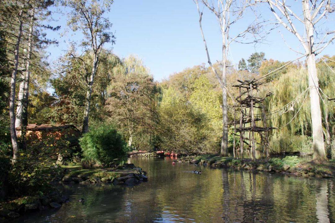 enclos zoo de beauval