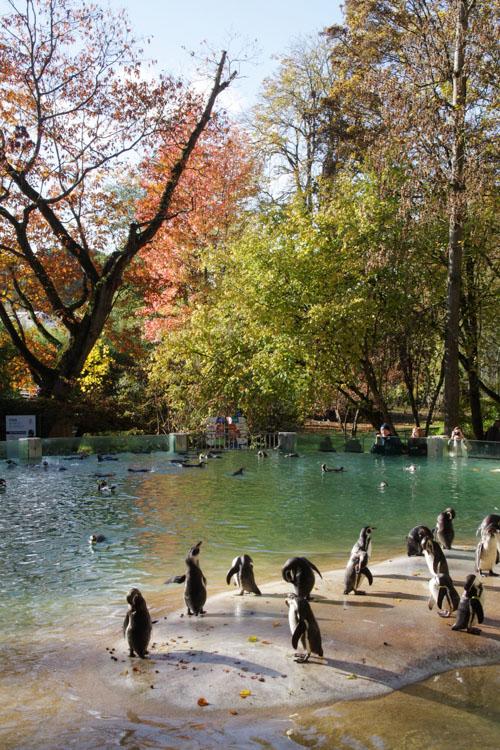 enclos des manchots - Zoo de Beauval