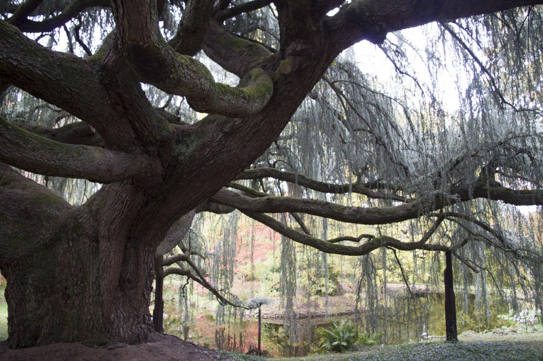 L'Arboreteum de la Vallée aux Loups - Chatenay-Malabry