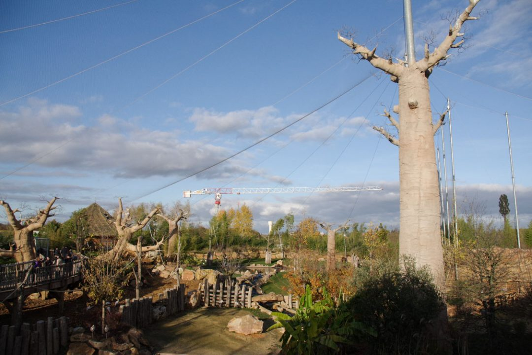 Biotope Africain du Zoo de Beauval