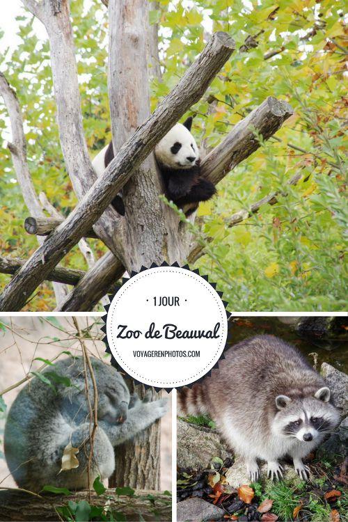 Une journée de visite au Zoo Parc de Beauval