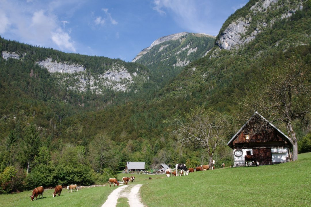 Alpages du parc national du Triglav