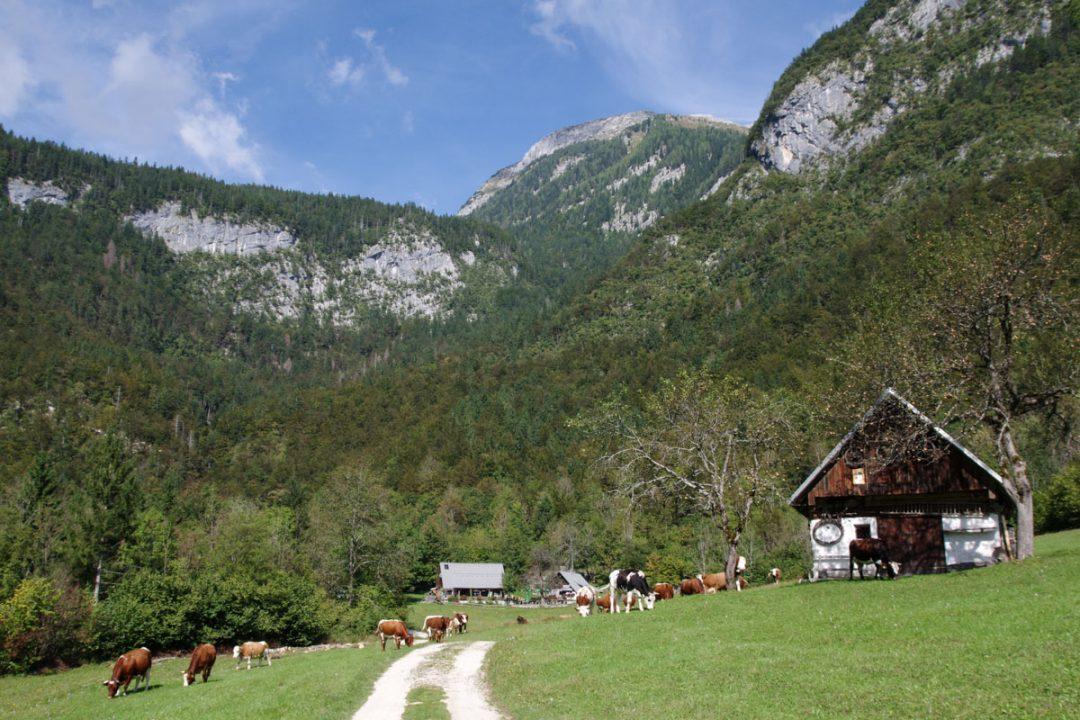 Alpages du parc national du Triglav