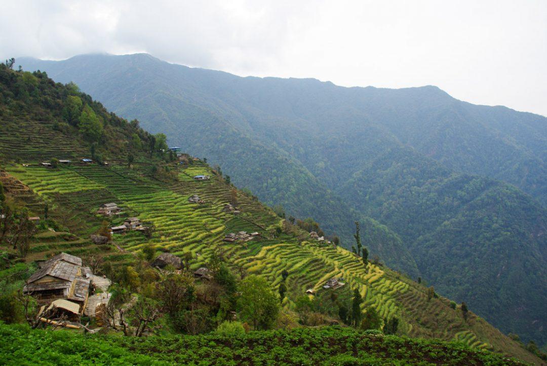 Vallée de Kimrong Khola - Annapurnas - Népal
