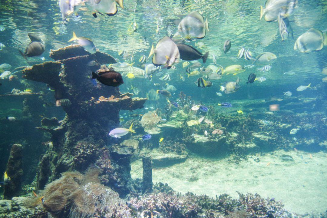 Poissons tropicaux - Aquarium de Nausicaa
